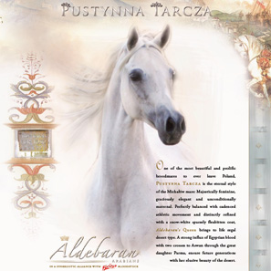 Dams of Distinction © Copyright Aldebaran Arabians