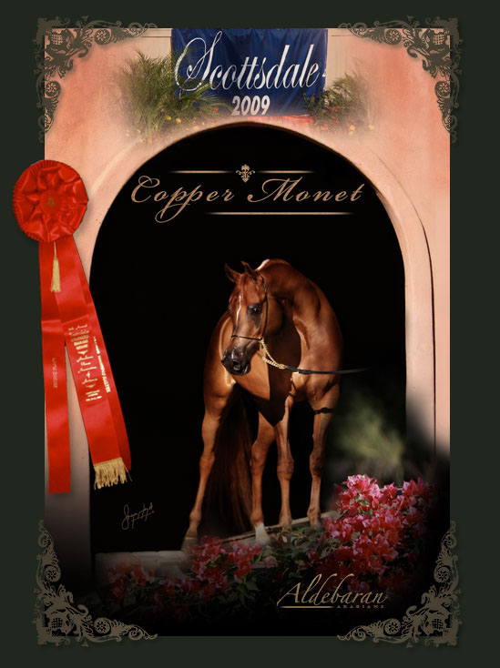 Copper Monet - Reserve Champion mare.