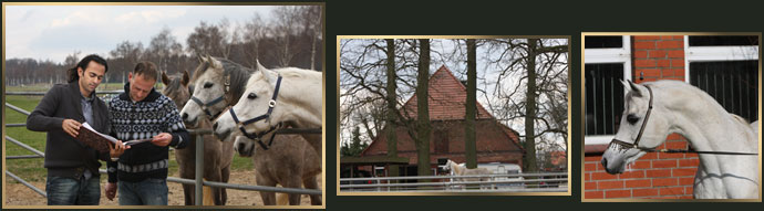Further afield: Our adventure across Germany also led us to Al Qusar Arabians, where Volker and Robert showed us their remarkable mare families and new-born foals, in addition to the beautiful Stallions they have at stud.